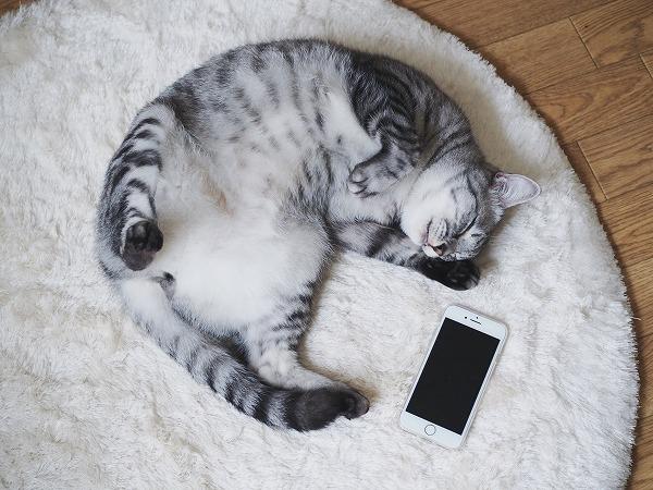 サバトラ猫とiphone7