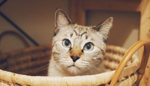 猫と洗濯かご