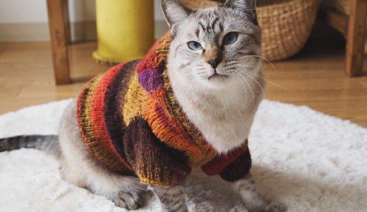 野呂くれよんで編む秋色猫セーター