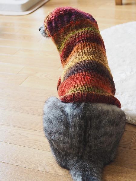 猫用セーターを着てフードをかぶったサバトラ猫の後ろ姿