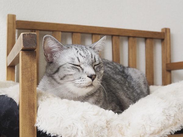 ベッドの上でまどろんでいるサバトラ猫