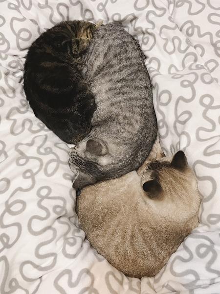 キジトラ・サバトラ・シャムトラの猫団子