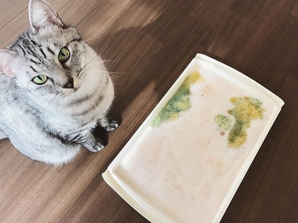 猫砂とサバトラ猫