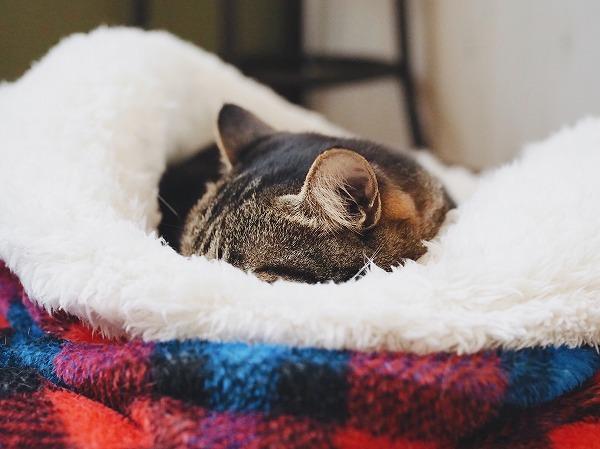 頭も隠して寝る体勢