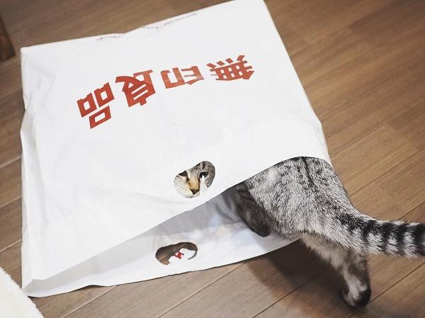 無印良品の袋の中に入ろうとしているサバトラ猫の尻