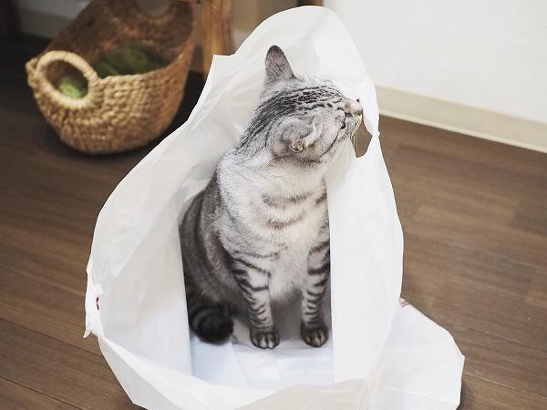 袋についたシールのにおいを嗅いでいるサバトラ猫