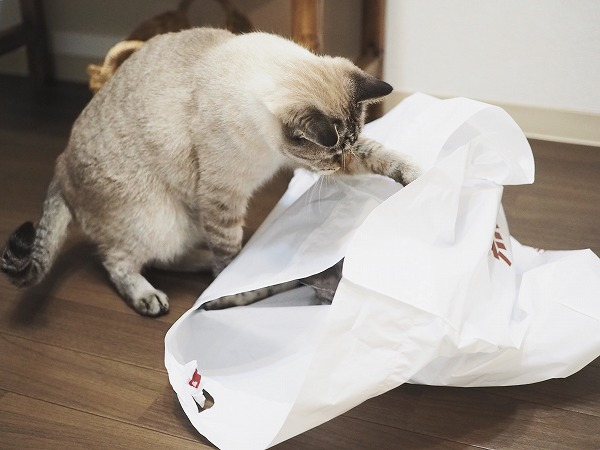 外から袋の中にいるサバトラ猫にパンチするシャムトラ猫