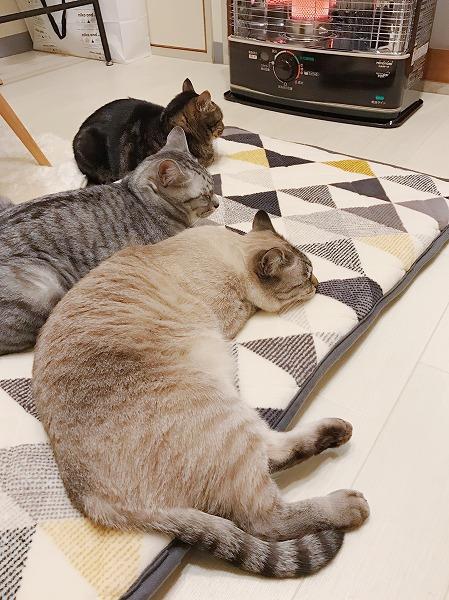 ストーブの前に並んでまったりしている猫たち
