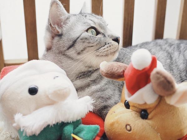 クリスマスとかいう人間界の謎行事に付き合わされるの巻