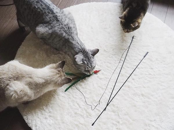 新しいおもちゃ「ダ・バード」に群がる猫たち