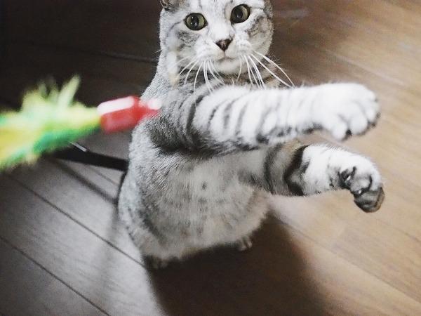 猫パンチは空振り