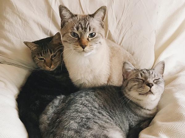 めずらしい三色猫団子