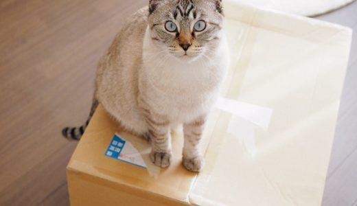 猫用マシュマロクッションを買ってみたけれど