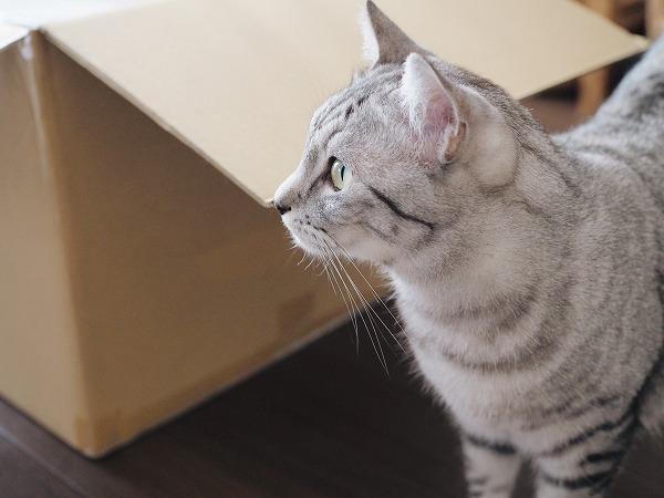 サバトラ猫の横顔