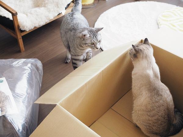 ベッドはスルーして空箱のほうに興味津々な2匹