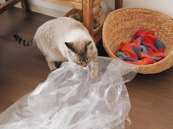 ビニール袋で遊ぶシャムトラ猫