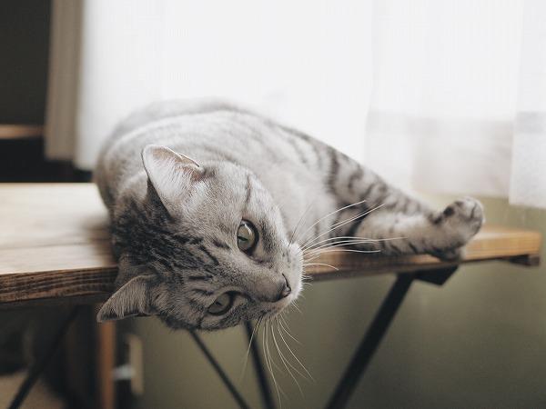 寝転んで机の角に顔をスリスリ