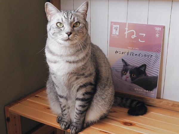 お座りサバトラ猫