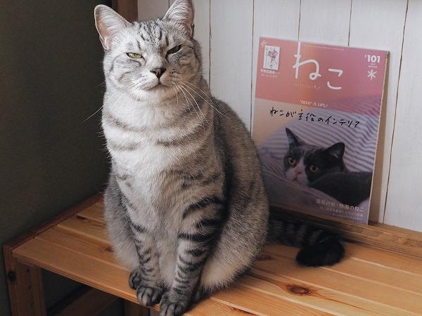 ジト目顔のサバトラ猫