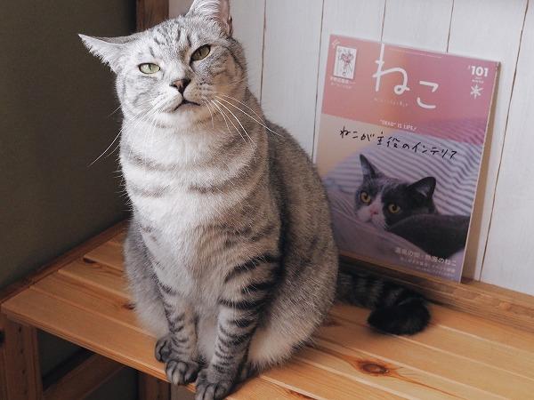 サバトラ猫