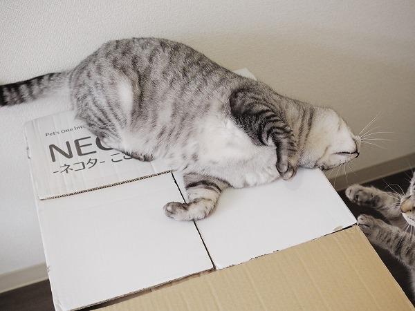 箱が開けられない
