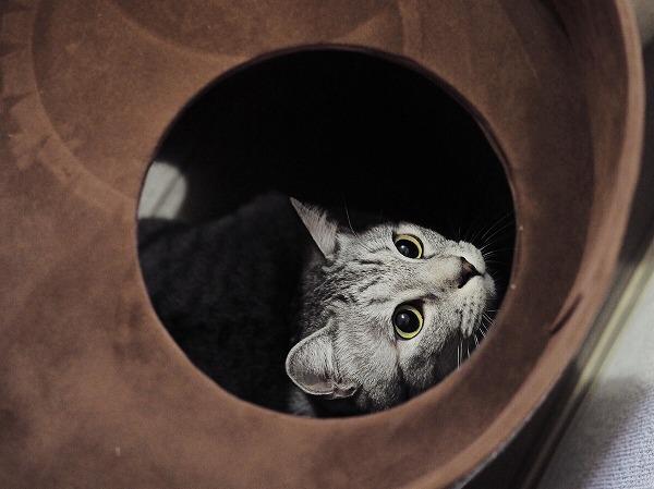 ステップの穴から覗き込んでみる
