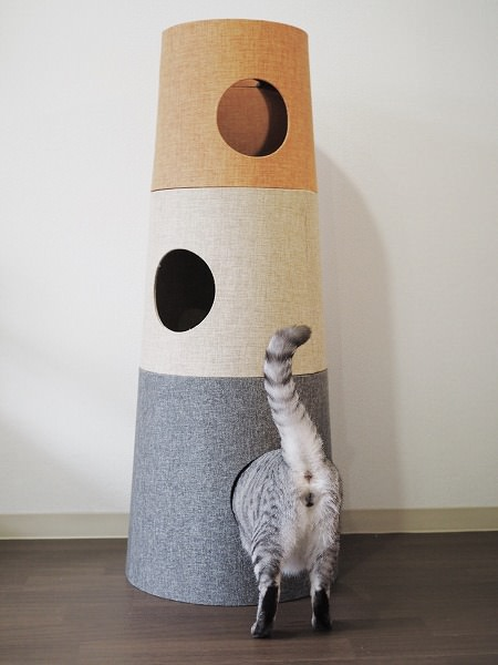 完成した「NECOTA セットカーサ」とサバトラ猫の尻