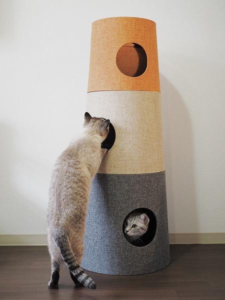 さっそく新しいキャットタワーで遊ぶシャムトラ猫とサバトラ猫