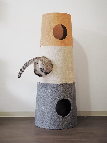 シャムトラ猫のお尻