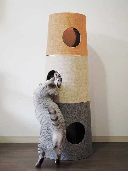 穴の中と外からじゃれて遊ぶサバトラ猫とシャムトラ猫