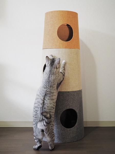 セットカーサの側面で爪とぎするサバトラ猫