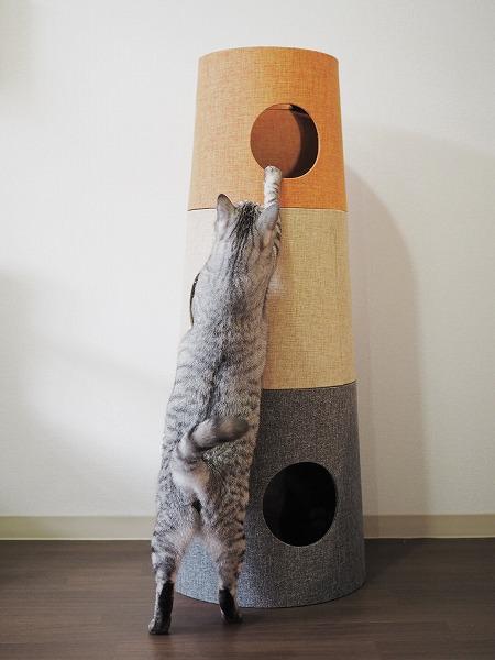 成猫なら一番上の段に手が届く