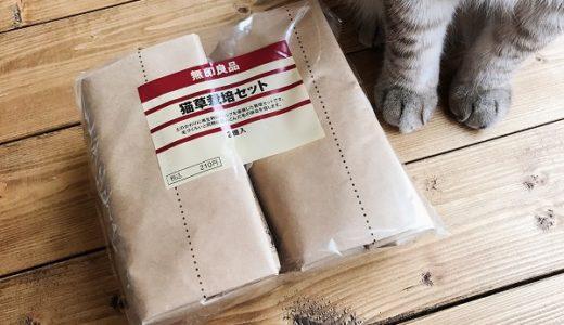 無印の猫草栽培記録:1日目