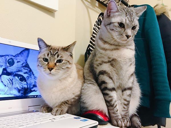 猫とかいう人間の作業を妨害するために創られし生き物
