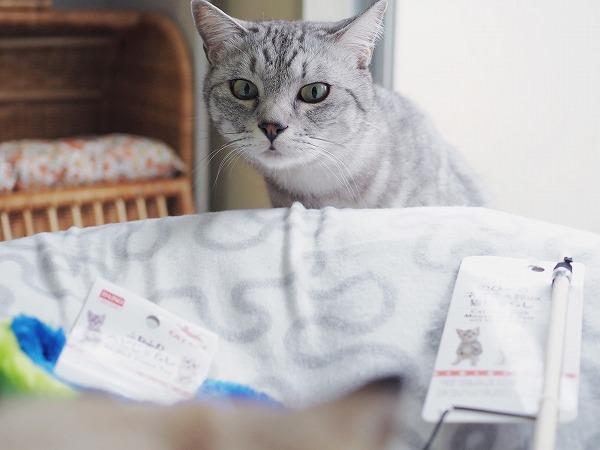 ダイソーの100円猫おもちゃ