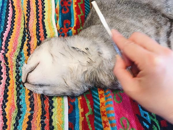 顎の下をコームで梳かしているところ