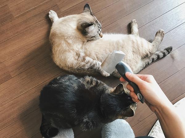 お腹を舐めているシャムトラ猫と、ニンゲンの足元にスタンバイしているキジトラ猫