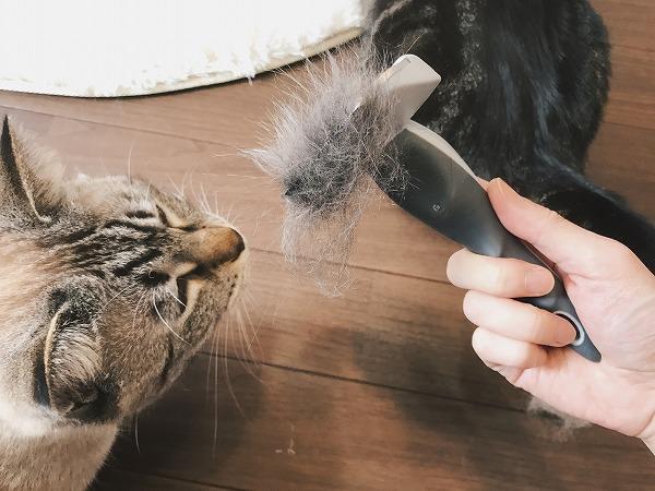 フーリーの刃についたたくさんの猫毛