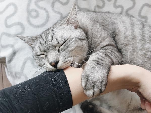 ニンゲンの腕を掴んで噛み付くサバトラ猫