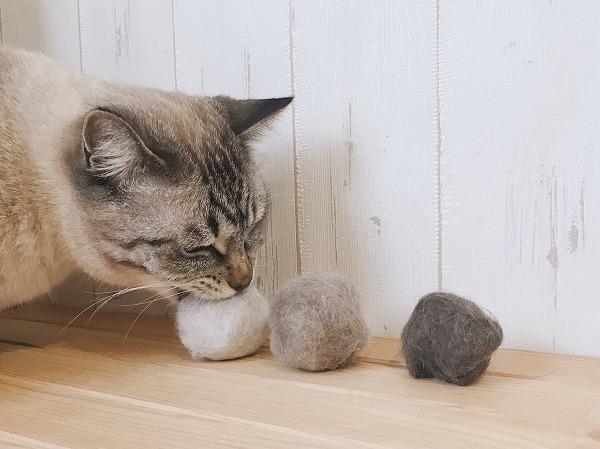 テト玉をくわえるシャムトラ猫