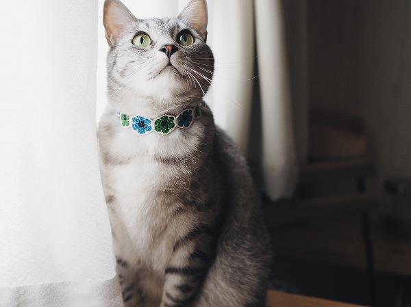 青と緑のアフリカンフラワーでできた首輪をつけたサバトラ猫