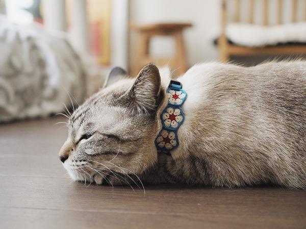 床に伏せるシャムトラ猫