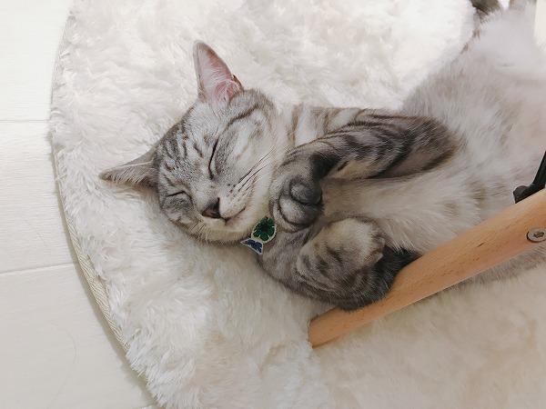 スヤスヤな寝顔