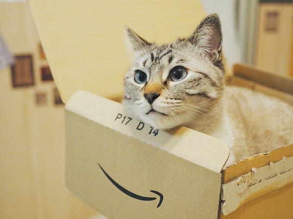 アマゾンの空き箱に入っているシャムトラ猫