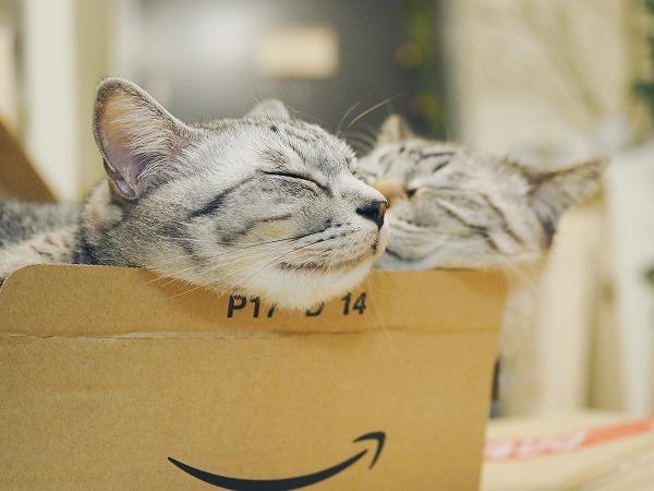 気持ちよさそうに眠るサバトラ猫とシャムトラ猫