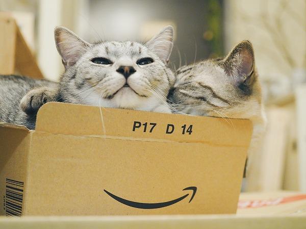 アマゾンの空き箱にみっちり詰まっている2匹の猫