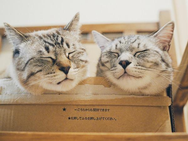 穏やかな顔で並んで寝ている猫たち