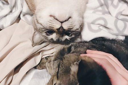 甘えん坊の末っ子猫