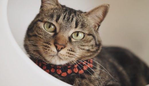 レトロなお花の猫首輪