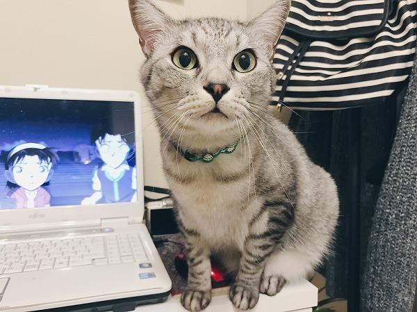 アニメ見てると何故か猫が不機嫌になる